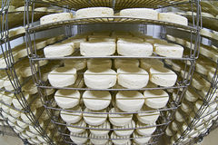 Cheese factory warehouse with shelves of product Stock Photography