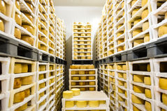 Cheese factory warehouse with shelves stacked with cheese Royalty Free Stock Photos