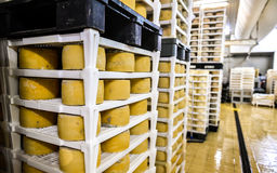 Cheese factory warehouse with shelves stacked with cheese Royalty Free Stock Images