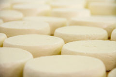 Cheese factory. Warehouses of cheese on the food factory stock photos