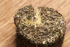 Cheese fantasy. Stock Image
