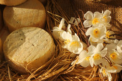 Cheese and flowers. Some forms of cheese and some flowers Stock Photo