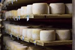 Cheese heads growing ripe on shelves of dairy food production farm house royalty free stock photos