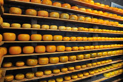 Cheese industry Stock Photos