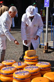 Cheese inspectors Royalty Free Stock Photography
