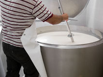 Cheese making on small farm. Artisan cheese. Cutti Royalty Free Stock Image