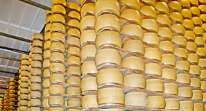 The cheese maturation room Stock Images