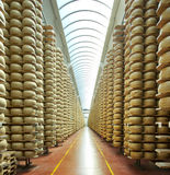 Cheese maturing storehouse Royalty Free Stock Photography