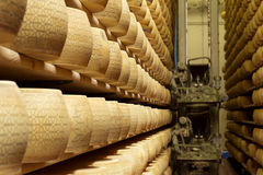 Cheese maturing storehouse Royalty Free Stock Image