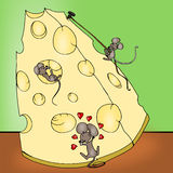 Cheese from the mice Stock Image