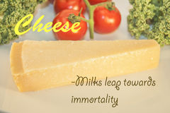 Cheese Milks leap towards immortality Stock Image