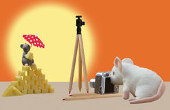 Cheese. The mouse photographed a cheese pyramid with a model Royalty Free Stock Photography