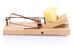 Cheese in mousetrap Stock Images