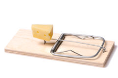 Cheese in mousetrap. On a white background Stock Image