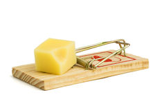 Cheese in mousetrap Stock Photo