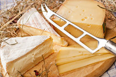 Cheese plate. Stillife of sorts of cheese on a plate decorated with hay Royalty Free Stock Photo