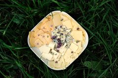 Cheese plate in green grass Royalty Free Stock Photo