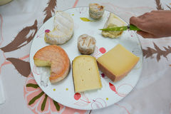 Cheese platter. With different cheeses royalty free stock images