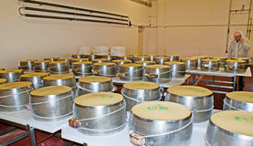 The cheese in pressuring moulds Stock Photo