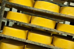 Cheese production Stock Photography