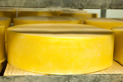 Cheese production Stock Photos
