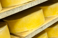 Cheese production Stock Images