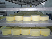 Cheese production Royalty Free Stock Photos