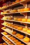 Cheese rounds. On the shelves Stock Images