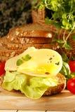 Cheese sandwich. Very fresh and tasty cheese sandwich stock photos