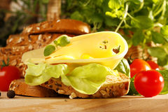 Cheese sandwich. Very tasty ans fresh cheese sandwich stock photography