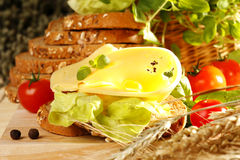 Cheese sandwich. Tasty and healthy cheese sandwich stock photos