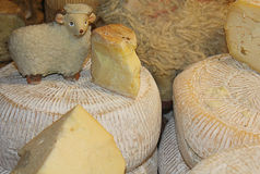 Cheese and sheep. Some forms of cheese and a sheep Stock Photo