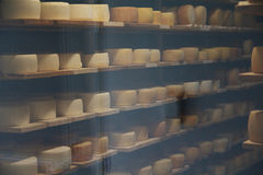 Cheese on shelves in the dairy room with temperature control Royalty Free Stock Photos