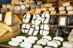 Cheese at shop stand royalty free stock images