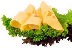 Cheese slices and fresh green lettuce isolated on a white backgr. Ound royalty free stock photo