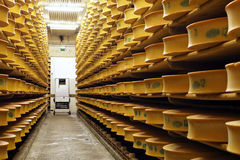 Cheese stock Royalty Free Stock Image