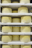 Cheese waiting to mature Stock Images