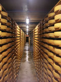 Cheese warehouse. Racks of cheese stored in a warehouse Royalty Free Stock Photography
