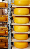 Cheese Wheels Stock Photography