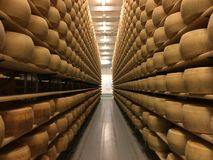 Cheese wheels in cheese cellar Stock Photo