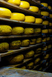 Cheese wheels in a cheese factory Royalty Free Stock Images