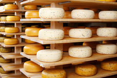 Cheese wheels in factory Stock Image