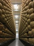 Cheese wheels maturing in cheese cellar Royalty Free Stock Image