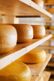 Cheese-wheels maturing on shelves Stock Photography