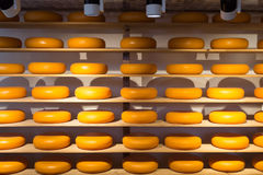 Cheese Wheels Stock Images