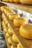 Cheese wheels Royalty Free Stock Photos