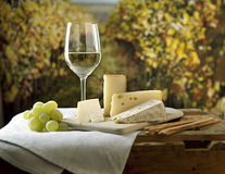 Cheese and Wine Royalty Free Stock Photos