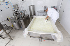 Cheese worker in a diary creamery Stock Images