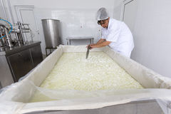 Cheese worker in a diary creamery Stock Photography