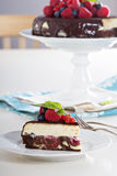 Cheesecake with berries on a brownie layer Stock Photos